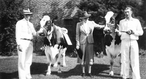 Ruth McCormick with prize cowsat her farm in Byron. She started her farm as a model for good dairy practices, early 20th century.