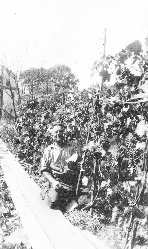 Italian immigrant, Thomas Lomabardozzi in his backyard with grapes in 1939.